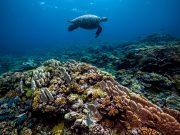 Grande Barreiras de Corais na Austrália