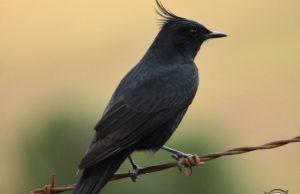 Birdwatching, opção de ecoturismo