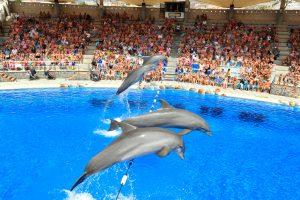 Cientistas pedem em carta aberta o fim do turismo com golfinhos