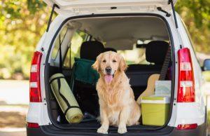 Como transportar seu cachorro da maneira certa