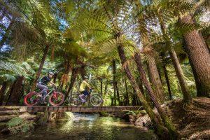 De cruzeiro a esporte em geleira experiências de verão na Nova Zelândia