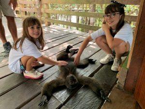 A mata, que dá às boas-vindas para turistas de todas as idades, tem como ponto de parada obrigatório o Juma Amazon Logde (www.jumalodge.com.br), hotel de selva que tem a interação com a natureza e a sustentabilidade como guias.