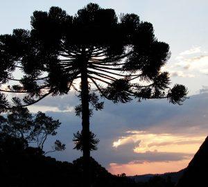 Dez motivos para visitar Monte Verde no inverno