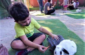 Fazendinhas são ótimos passeios para fazer crianças se aproximarem aos animais