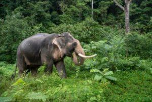 Fim do turismo de entretenimento com animais silvestres pode evitar novas pandemias