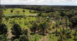 Hotel cultiva produtos orgânicos para abastecer restaurante