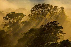 Hotel na Amazônia vende fotos de natureza para ajudar famílias carentes