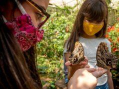 O encantamento das crianças com as aves da Mata Atlântica