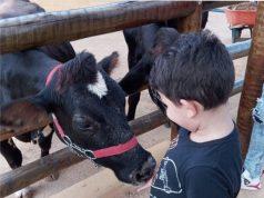 PET ZOO aproxima as crianças aos bichos da fazenda