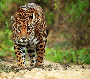 Pantanal... Destino inusitado!