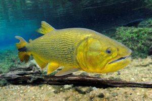 Mato Grosso do Sul promove pesca esportiva
