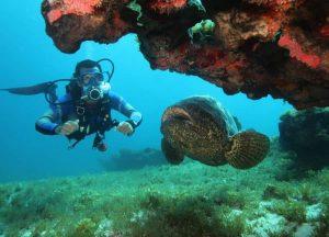 Pesquisa com mergulhadores demonstra importância da geoconservação do ambiente marinho