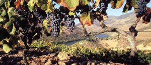 Portugal lança campanha sobre roteiros de vinhos
