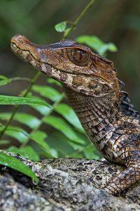 Serra Grande, mais um ecodestino em Roraima