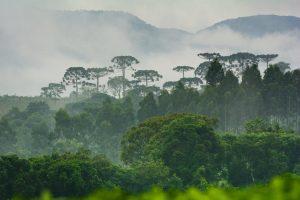 Turismo local ecológico o pós-pandemia para o setor