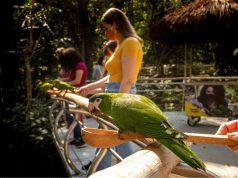 Turistas podem alimentar periquitos no maior viveiro de aves do Brasil